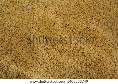 Organic Paddy rice, Paddy rice in fresh market. #1408338749
