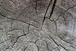 Organic pattern made of an old grey tree