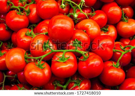 Organic red tomatoes. Fresh red tomatoes. Tomato harvest. Summer tomatoes.