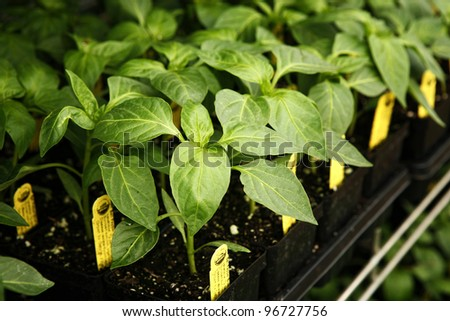 Organic sprouts - stock photo