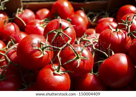Organic tomatoes cluster.