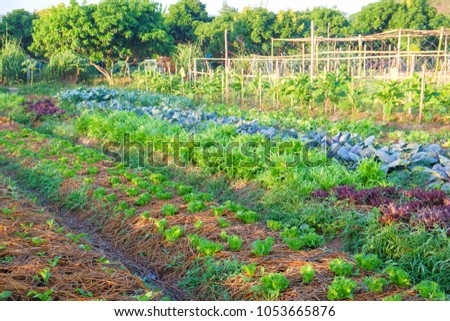 organic vegetable garden,future agriculture for safety food in Thailand  #1053665876