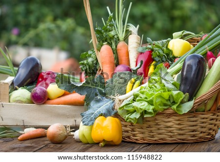 Organic vegetables - stock photo