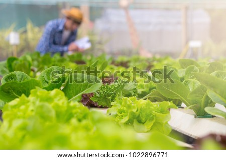 Organic vegetables are grown in farm grown by farmers. organic farmer monitoring their organic  to develop organic grown vegetables. #1022896771