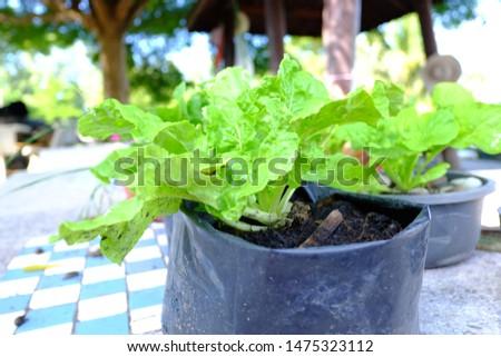 organic vegetables of organic farming