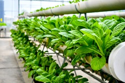 organic vertical farming