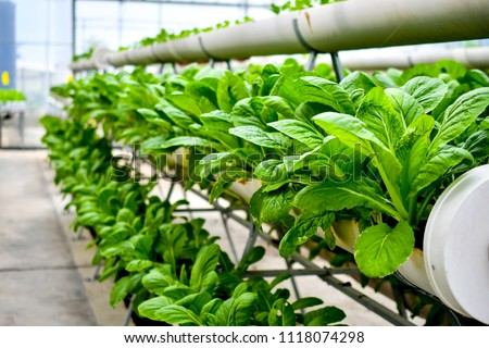 organic vertical farming #1118074298