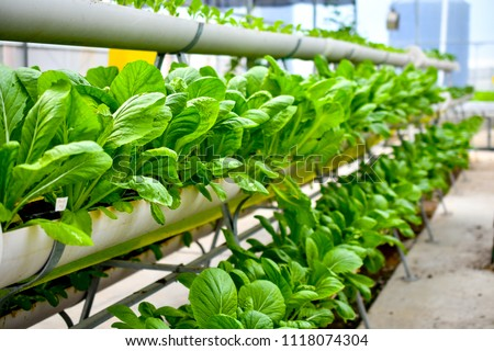 organic vertical farming #1118074304
