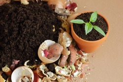 Organic waste, heap of biodegradable vegetable compost with decomposed organic matter on top and seedling in terracota flower pot, closeup, zero waste, eco friendly, waste recycling concept