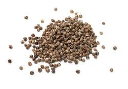 Organic Wingless Moringa (Moringa oleifera) seeds on white background