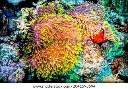 Organisms of the underwater world. Underwater life macro view. Macro underwater life. Underwater world
