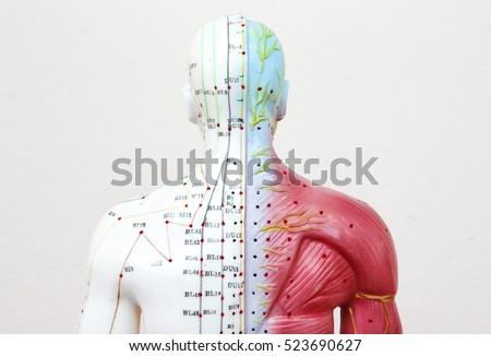 Oriental Medicine model in hospital , figure on white background