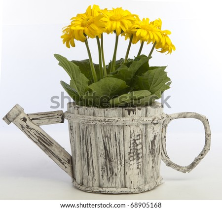 Original flowerpot in form of watering can with yellow gerbera hybrid flowers
