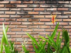 Original orange bricks wall with tropical flower in font.