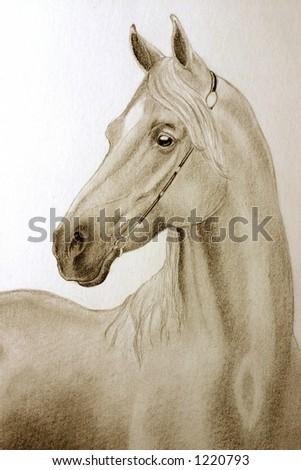 arabian horse wallpaper. of a fine arabian horse in