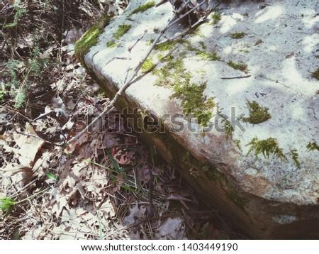 Ormanda yosunlu bir kaya çok güzel görünüyor Stok fotoğraf ©