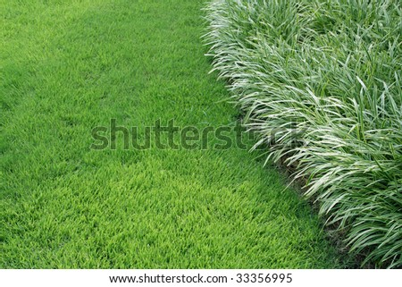 Ornamental grass edge with space stock photo 33356995 for Ornamental grasses for small spaces