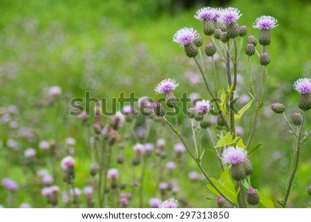 Ornamental grass with pink purple flowers nature background with ornamental grass with pink purple flowers nature background with copy space mightylinksfo