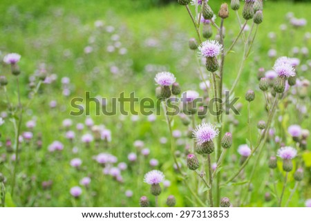 Free photos ornamental grass with pink purple flowers nature ornamental grass with pink purple flowers nature background with copy space 297313853 mightylinksfo