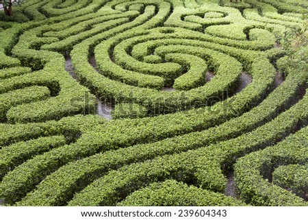 Ornamental Maze cut into hedge in Malaysian garden - Shutterstock ID 239604343