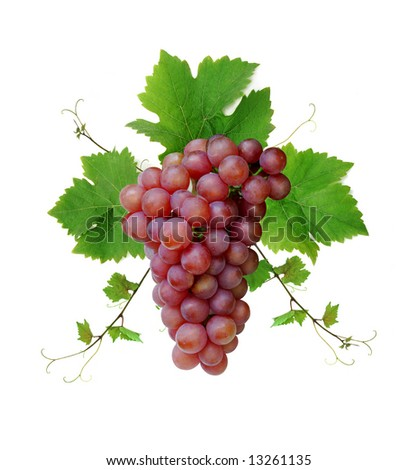Ornamental motif of pink wine grape, isolated on white background