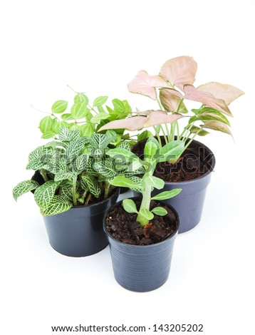ornamental plants on white background