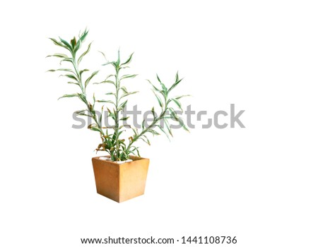 Ornamental plants or garden plants tree in pot isolated on white background with clipping path #1441108736