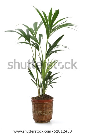 Ornamental Plants over white background