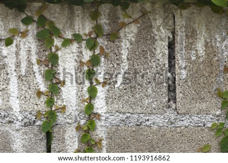 Ornamental shrubs ,Wall shrubs #1193916862