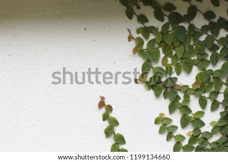 Ornamental shrubs ,Wall shrubs #1199134660