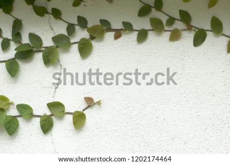 Ornamental shrubs ,Wall shrubs #1202174464