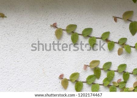 Ornamental shrubs ,Wall shrubs #1202174467