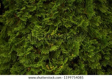 Ornamental shrubs Wall shrubs green background bush #1199754085
