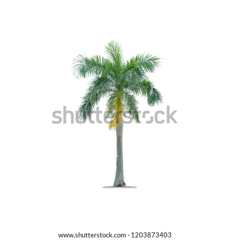 Ornamental trees  Palm tree pine isolated from a white background ornamental tree.   #1203873403