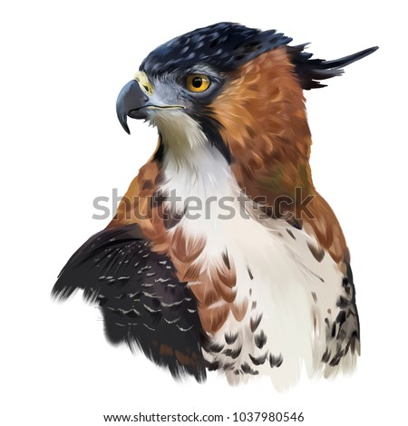 Ornate hawk-eagle watercolor painting