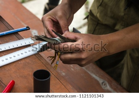 Ornithology, the study of birds. Wooden table, rulers. Tanned hands hold a small bird with a ring on its foot. Research, scientific work. Daylight.