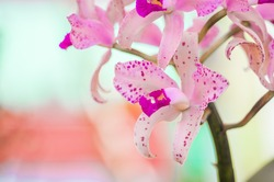 Orquideas with beautiful colors and backgrounds