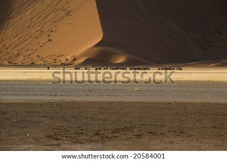 Oryx antelopes in front of a dune in the Namib desert