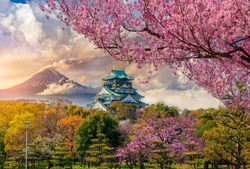 Osaka Castle and full cherry blossom, with Fuji mountain background, Japan