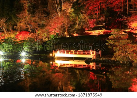 Oshu City, Iwate Prefecture Light-up of Autumn Leaves Stock photo ©