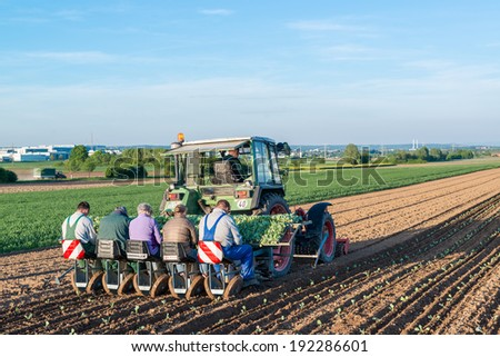 OSTFILDERN-SCHARNHAUSEN, GERMANY - MAY 5, 2014: Several people feeding young salad plants into machinery at the back of a tractor on May, 5, 2014 in Ostfildern-Scharnhausen near Stuttgart, Germany.