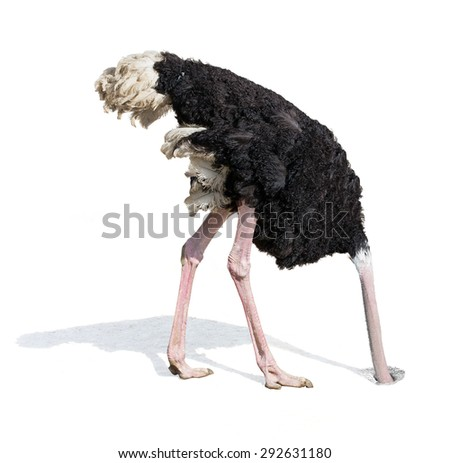 Shutterstock ostrich burying head in sand ignoring problems