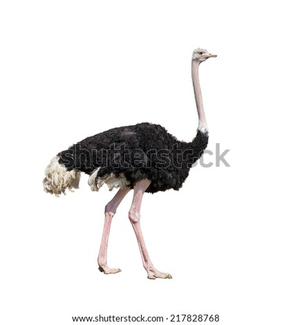 ostrich full length isolated on white - Shutterstock ID 217828768