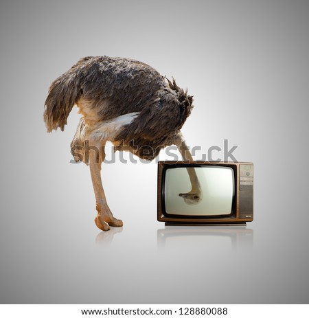 Ostrich Looking Through Television On Gray Background