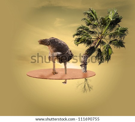 Ostrich Looking Underground With Tree And Sky In The Background