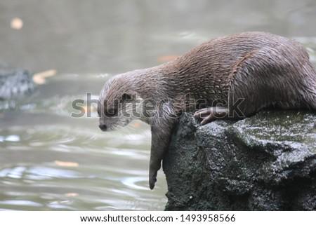 Otters are carnivorous mammals belonging to the Lutrinae subfamily. semi-aquatic, aquatic, or marine animals, and they eat fish #1493958566