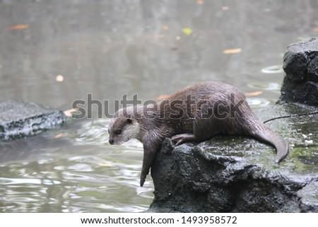 Otters are carnivorous mammals belonging to the Lutrinae subfamily. semi-aquatic, aquatic, or marine animals, and they eat fish #1493958572