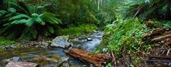 Otways Rainforest, Vic, Australia