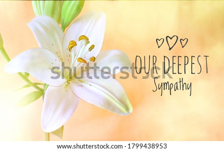 Our deepest sympathy card. Soft focus white lily on textured soft coloured bokeh background.  Foto stock ©