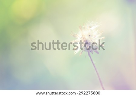 out of focus flower Grass on abstract bokeh background - Shutterstock ID 292275800